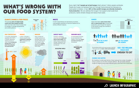 Infographic - Issues about our food system. | Year 9 Geography - Sustainable Biomes | Scoop.it
