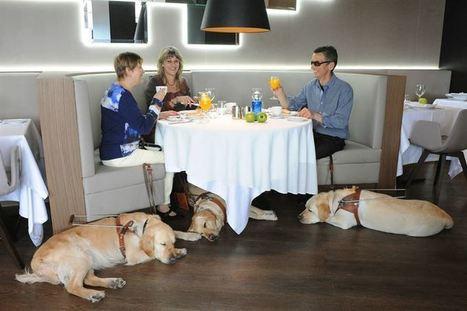 Más de 1.000 perros guía trabajan en España | Modern dog training methods and dog behavior | Scoop.it