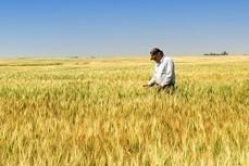 AGRICOLTURA: LA RICCHEZZA DEL NOSTRO VENETO - Blog di Antonio De Poli   Spending Review Solidale, Facciamo respirare il volontariato   Scoop.it