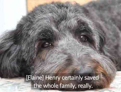 Animal Heroes: Henry The Hearing Dog - PetsLady.com | Dogs | Scoop.it