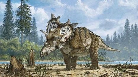 New horned dinosaur species discovered in Montana by amateur | Archaeology, Culture, Religion and Spirituality | Scoop.it