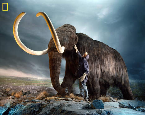 6 Extinct Animals That Could Be Brought Back to Life | News,  articles, workwear, safety, security | Scoop.it