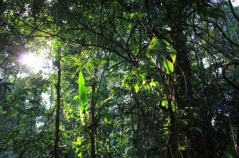 Amazonie: des milliers d'espèces d'arbres menacées | Biodiversité & Relations Homme - Nature - Environnement : Un Scoop.it du Muséum de Toulouse | Scoop.it