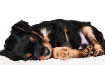 Daily Cute: Sleepy Animals   Cute Baby Animals   Scoop.it