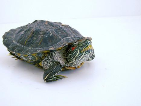 Management : ces tortues qui freinent l'innovation | Analyse Stratégique | Scoop.it