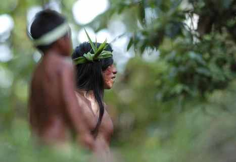 Amazon Tribe Creates 500-Page Remarkable Natural Medicine Encyclopedia   TOK Resources   Scoop.it