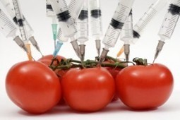 Dangerous Toxins From Genetically Modified Plants Found in Women & Fetuses | Wake Up World | YOUR FOOD, YOUR HEALTH: Latest on BiotechFood, GMOs, Pesticides, Chemicals, CAFOs, Industrial Food | Scoop.it