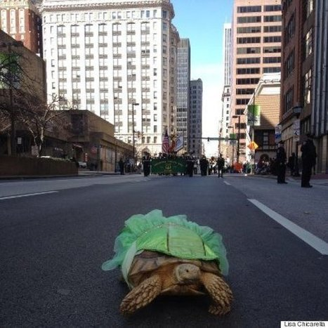 Wasabi, A Therapy Tortoise Who Wears A Dress, Has A Tough Shell But A Cuddly Inside | Pet Sitter Picks | Scoop.it