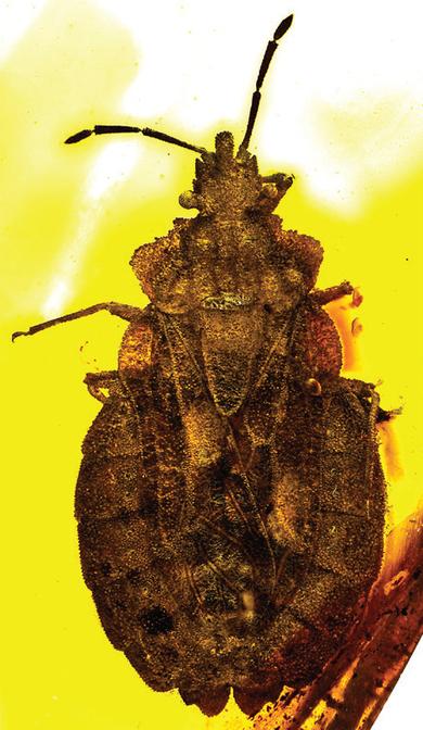 Une nouvelle espèce figée dans l'ambre | Ecology view | Scoop.it
