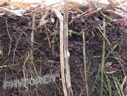 Dépollution des solides et traitement des sédiments - Bambou-Assainissement® | Matériaux | Scoop.it