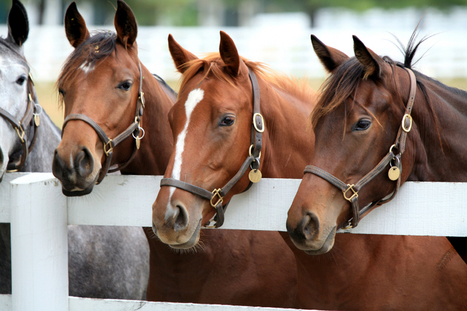 Nutrition, Biosecurity Among Topics To Be Addressed At 2016 Welfare & Safety Summit - Horse Racing News | Paulick Report | Racing Business | Scoop.it
