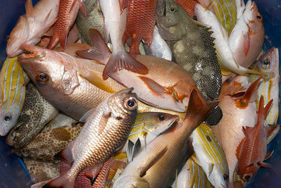 12 Fish You Should Never, Ever Eat | Healthy Recipes and Tips for Healthy Living | Scoop.it