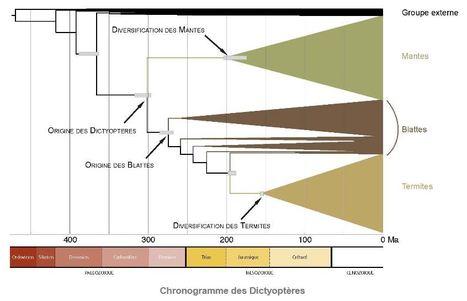 ADN et fossiles permettent de dater l'origine des blattes, des mantes et des termites | EntomoNews | Scoop.it