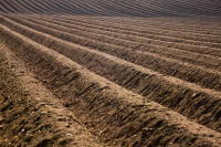 New research: synthetic nitrogen destroys soil carbon, undermines soil health | Understanding Outdoor Experiences and their impacts | Scoop.it
