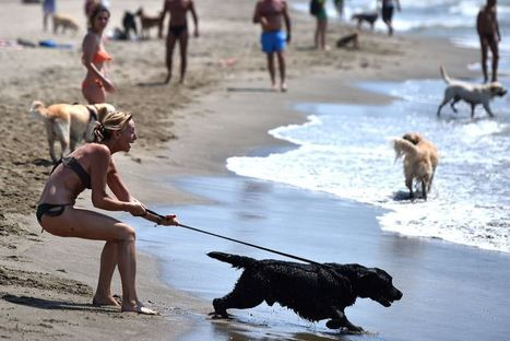 "Check out the beach that says: ""Yes, dogs allowed"" 