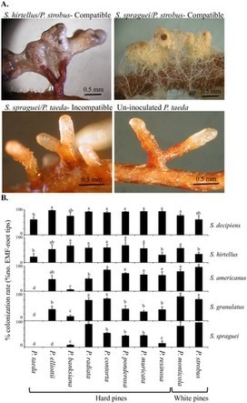 Metatranscriptomic Study of Common and Host-Specific Patterns of Gene Expression between Pines and Their Symbiotic Ectomycorrhizal Fungi in the Genus  Suillus | Plant-Microbe Symbiosis | Scoop.it