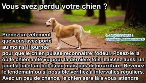 Une astuce pour retrouver un chien perdu | 16s3d: Bestioles, opinions & pétitions | Scoop.it