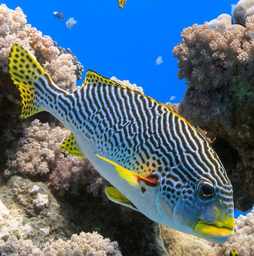 Great Barrier Reef Tours | Media | Scoop.it