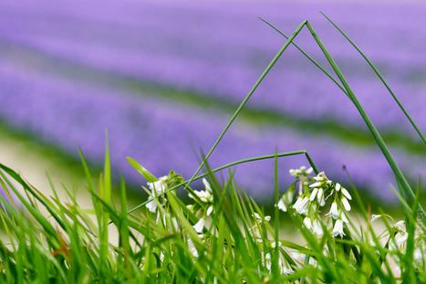 photo en Finistère, Bretagne et...: fleurs sauvages / cultivées (8 photos) | photo en Bretagne - Finistère | Scoop.it