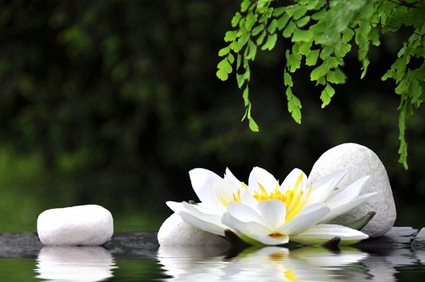 Can Visiting A Spa Be Helpful In Body Detoxification? | News and Articles | Scoop.it