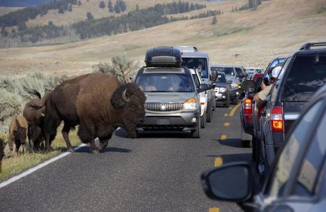 Tourist Misbehavior on the Rise in U.S. Parks' 100th Year | Tourism : Collaterals | Scoop.it