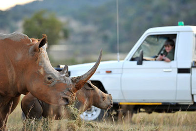 Rhino suspects arrested | The New Age Online | Kruger & African Wildlife | Scoop.it