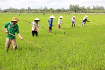 Farmers urged to go organic, shun chemicals - Agriculture - VietNam News | Fertility and PCBs | Scoop.it