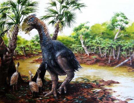 New CU study confirms giant flightless bird wandered the Arctic 50 million years ago   Gaia Diary   Scoop.it