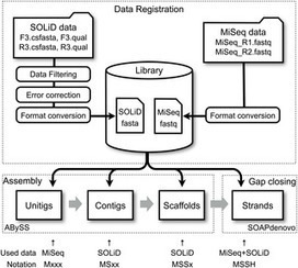 Hybrid  De Novo  Genome Assembly Using MiSeq and SOLiD Short Read Data | Bioinformatics Training | Scoop.it