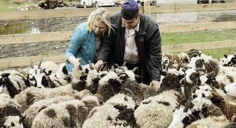 On wings of El Al, biblical sheep to end 3,000-year exile | Jewish Education Around the World | Scoop.it