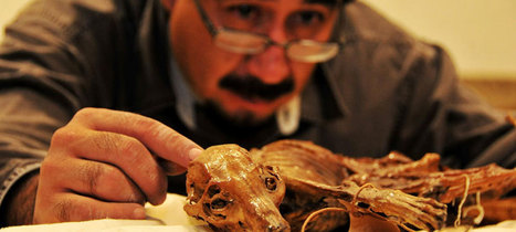 Cave used to bury the dead contained a mummified dog   Archaeology News   Scoop.it
