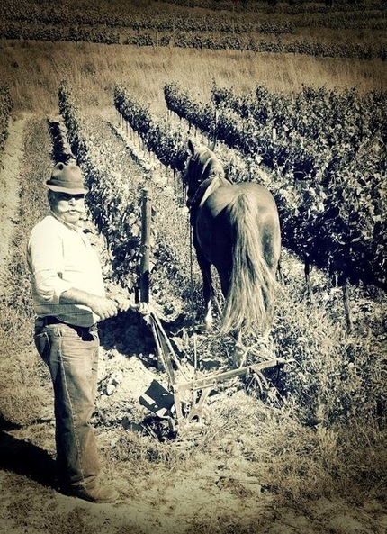 Fonseca's Port - We Still do it like the Old Way | Wine and Port Wine Trends | Scoop.it