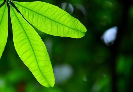 Des chercheurs créent des plantes bioniques   Industry - Innovation - Creation -   Scoop.it