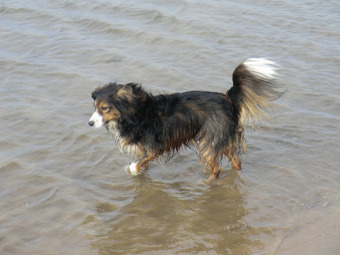 Time to Book Your Next Dog Friendly Holiday! | Dog Friendly Days ... | Plan a Dog Friendly Holiday | Scoop.it