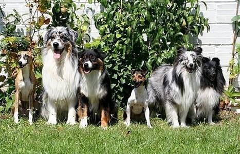 Débuter le canicross | Le sport avec un chien - Sport with dogs | Scoop.it