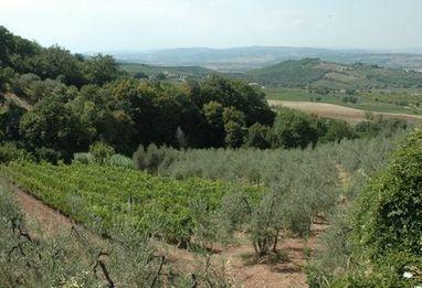 Il Paradiso di Manfredi - Vins Libres | Gastronomy & Wines | Scoop.it