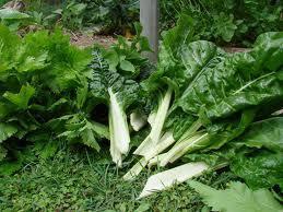 Cuidado con los vegetales de hojas verdes en la preparación de purés para los niños | Fer Tiburcio | Scoop.it