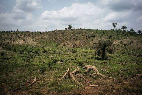 Nourrir l'humanité sans détruire de nouvelles forêts | Questions de développement ... | Scoop.it