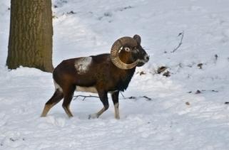 Poľovníctvo je pretkané tradíciami a obyčajmi | Favorite blog posts | Scoop.it