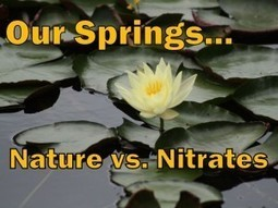 Our Florida Springs: Nature vs. Nitrates | CMF Public Media | @The Convergence of ICT & Distributed Renewable Energy | Scoop.it