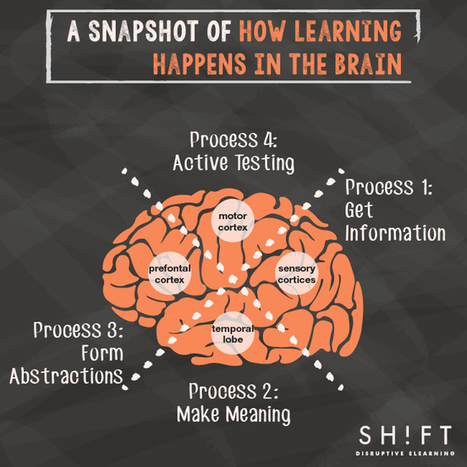 How the Brain Learns—A Super Simple Explanation for eLearning Professionals | Higher Education and more... | Scoop.it