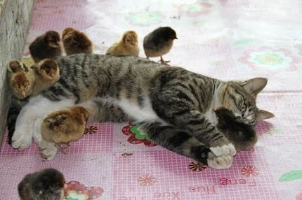 "Anita Lequoia - Google+ - ""CHICKS JUST DIG ME!!!"" 