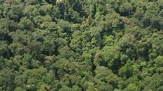 Le rapport sur l'avenir de la forêt française et de la filière bois est présenté jeudi 6 juin  - France 3 Bourgogne | Notre Dame Des Bois | Scoop.it