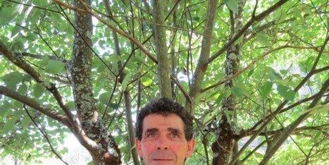 Mieux connaître les arbres patrimoniaux - Sud Ouest   social media subjects   Scoop.it