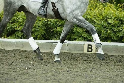 5 top tips to help your horse concentrate   Horse and Rider Awareness   Scoop.it