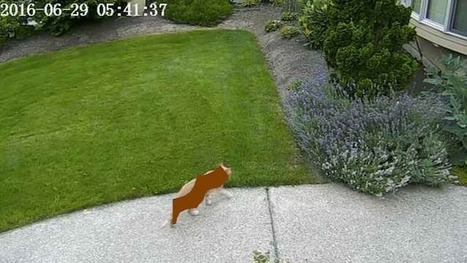 AI deep learning system helps keep lawn cat poop-free | Home Automation | Scoop.it