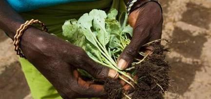 Organisation des Nations Unies pour l'alimentation et l'agriculture:Portail d'information sur les sols | Chimie verte et agroécologie | Scoop.it