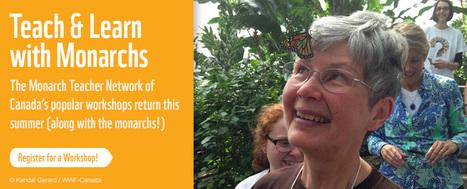 WWF | HCS Learning Commons Newsletter | Scoop.it
