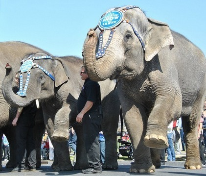 Success: San Francisco Bans Wild Animals in Entertainment | GarryRogers NatCon News | Scoop.it