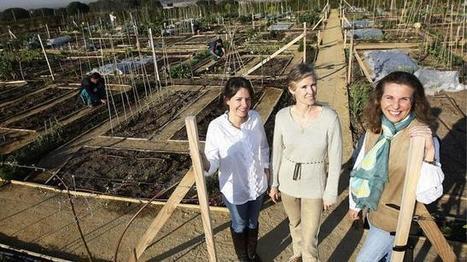 Ana Botella se compromete a «promover los huertos urbanos»   Huertos urbanos 2.0   Scoop.it